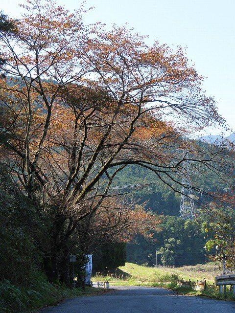 散歩で出会った光景(その2)(撮影:11月3日)_e0321325_19142531.jpg