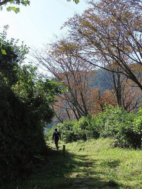 散歩で出会った光景(その2)(撮影:11月3日)_e0321325_19195305.jpg