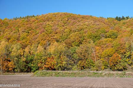 秋晴れの就実の丘と紅葉~10月の就実_d0340565_20124249.jpg