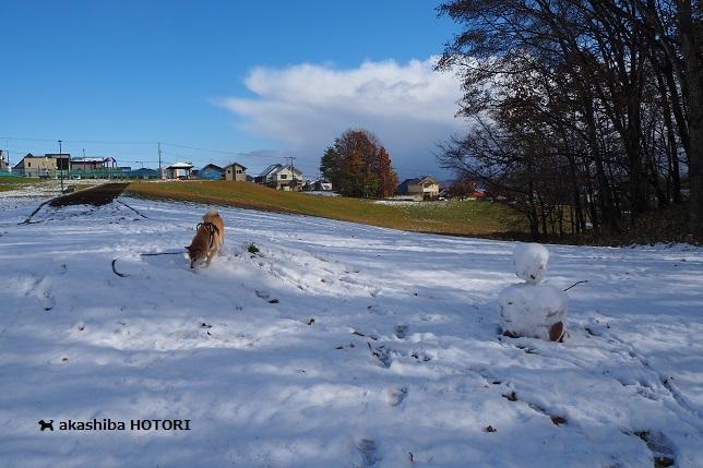 誰かさんの雪だるま_f0150377_21515603.jpg
