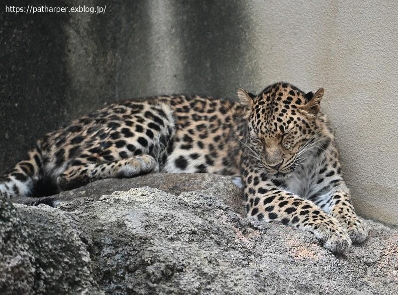 2020年10月 王子動物園2 その1_a0052986_07224680.jpg