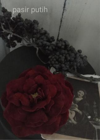 薔薇咲きました☆_e0231290_17591686.jpg