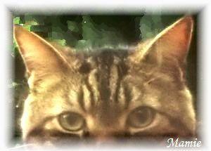 猫のポストカード_d0387712_23003110.jpg