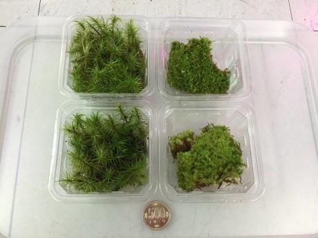 201112 熱帯魚 めだか 水草 観葉植物_f0189122_12445245.jpeg