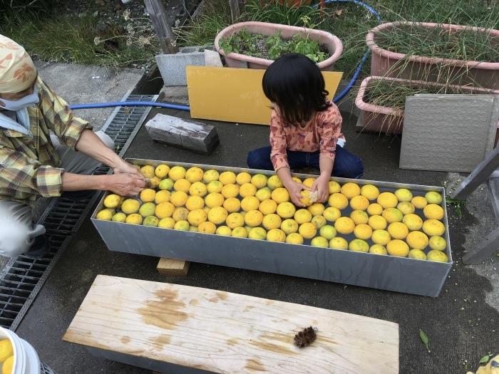 柚子洗いの作業風景_e0155231_22430027.jpeg