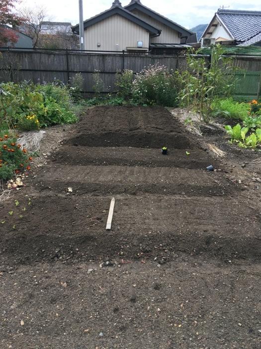 家の芋掘り_e0155231_23033242.jpeg