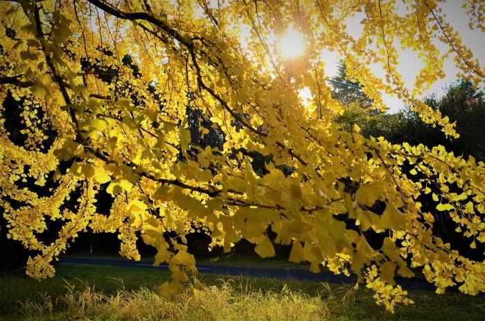 共鳴する季節の輝き_f0045844_09342031.jpg