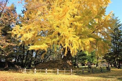 弘前公園を秋さんぽ_2020.11.12撮影_d0131668_13511637.jpg
