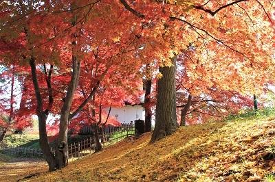 弘前公園を秋さんぽ_2020.11.12撮影_d0131668_13550798.jpg