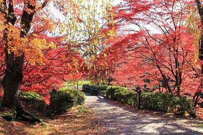 弘前公園を秋さんぽ_2020.11.12撮影_d0131668_13560385.jpg