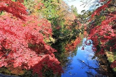 弘前公園を秋さんぽ_2020.11.12撮影_d0131668_13564904.jpg