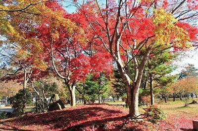 弘前公園を秋さんぽ_2020.11.12撮影_d0131668_13580474.jpg
