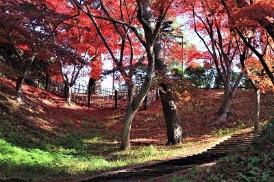弘前公園を秋さんぽ_2020.11.12撮影_d0131668_14051379.jpg