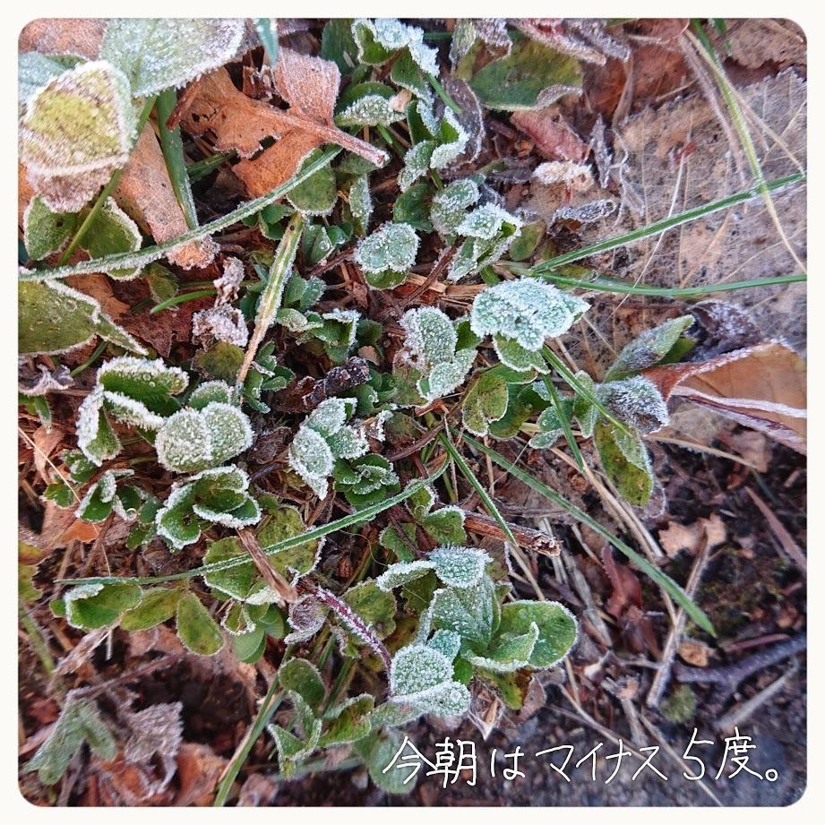 [English] rice(2) / [photo] 今朝はマイナス5度_e0132084_07254103.jpg