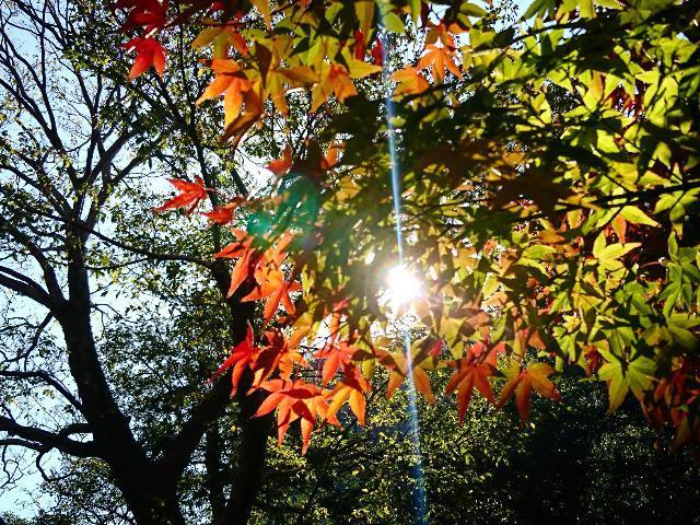 秋景色_b0369993_17282243.jpg