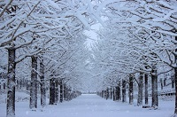 あなたの見つけた冬景色