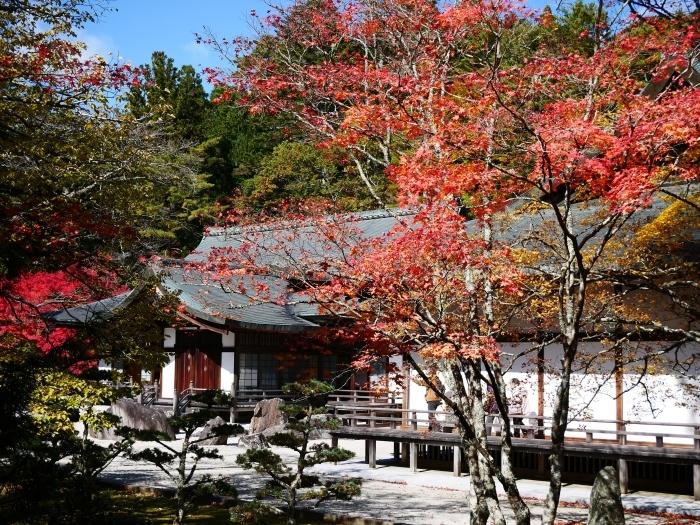 紅葉の高野山へ 3 金剛峰寺へ 2020-11-14 00:000_b0093754_19512402.jpg