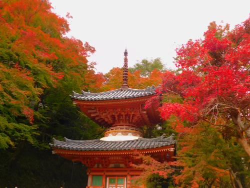 岸和田の大威徳寺。11月11日_e0136066_20540312.jpg