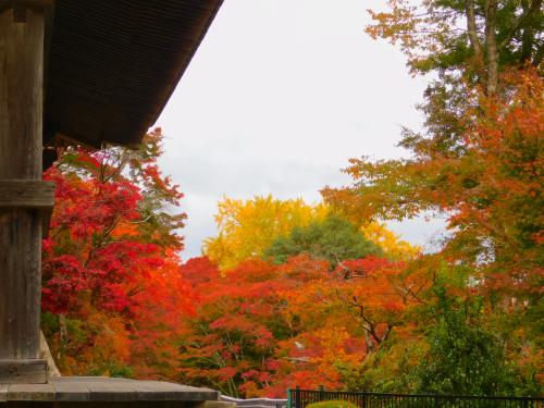 岸和田の大威徳寺。11月11日_e0136066_20540760.jpg