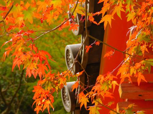 岸和田の大威徳寺。11月11日_e0136066_20541171.jpg