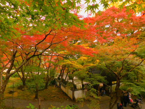 岸和田の大威徳寺。11月11日_e0136066_20542190.jpg