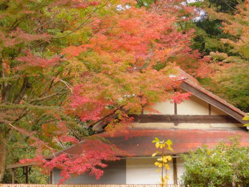 岸和田の大威徳寺。11月11日_e0136066_21062470.jpg