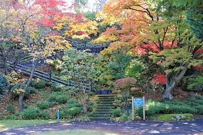 藤田記念庭園を秋さんぽ_2020.11.12撮影_d0131668_15212798.jpg
