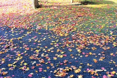 藤田記念庭園を秋さんぽ_2020.11.12撮影_d0131668_15235164.jpg