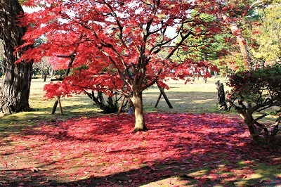 藤田記念庭園を秋さんぽ_2020.11.12撮影_d0131668_15244806.jpg