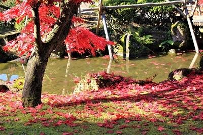 藤田記念庭園を秋さんぽ_2020.11.12撮影_d0131668_15252374.jpg
