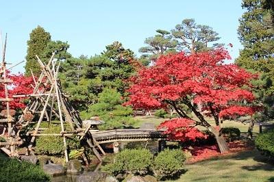 藤田記念庭園を秋さんぽ_2020.11.12撮影_d0131668_15270132.jpg