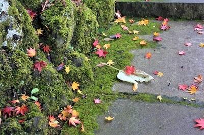 藤田記念庭園を秋さんぽ_2020.11.12撮影_d0131668_15285779.jpg