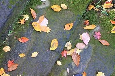 藤田記念庭園を秋さんぽ_2020.11.12撮影_d0131668_15294821.jpg