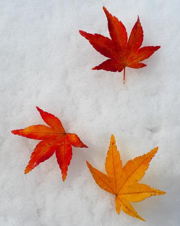 紅葉と雪と雲海と_b0086273_15585504.jpg