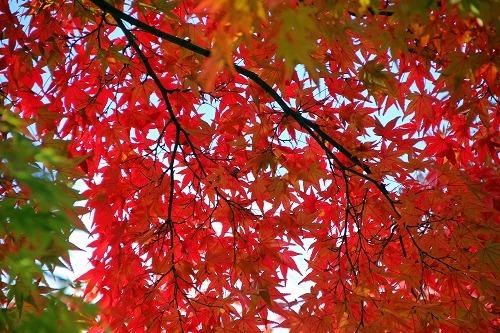 京都旅-3日目_d0110193_19163300.jpg