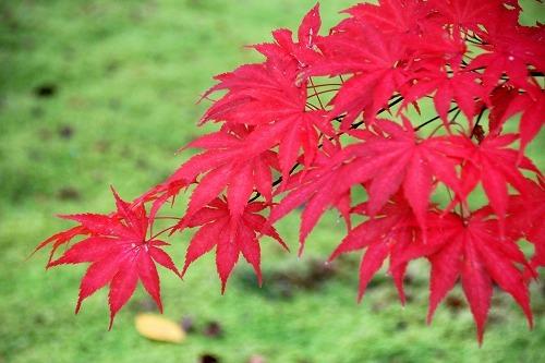 京都旅-3日目_d0110193_19185415.jpg