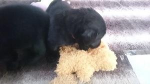 犬は大らかに育てよう!2の⑨_b0084194_16473060.jpg