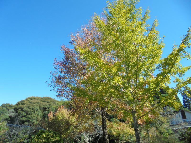 秋空高く。。。_a0208899_11361892.jpg