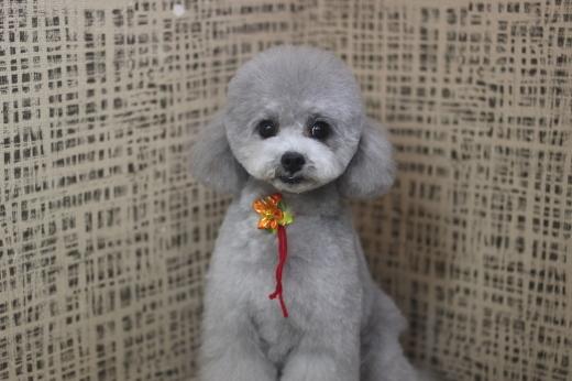 11月10日ご来店のワンちゃんです!!_b0130018_09283548.jpg