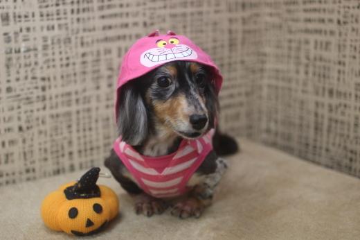 11月10日ご来店のワンちゃんです!!_b0130018_09293773.jpg