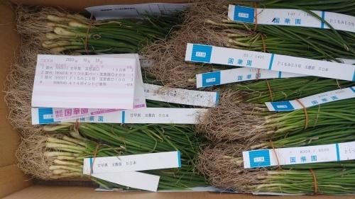 玉葱苗を植えました。_c0300035_19151204.jpg