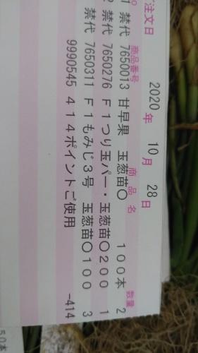 玉葱苗を植えました。_c0300035_19153653.jpg