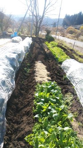 玉葱苗を植えました。_c0300035_19503086.jpg