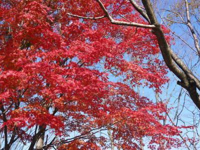 2020年の菊池渓谷&菊池、阿蘇スカイラインの紅葉は今が見ごろ!ビューポイント&穴場スポット紹介!_a0254656_16503558.jpg