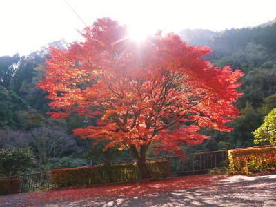 2020年の菊池渓谷&菊池、阿蘇スカイラインの紅葉は今が見ごろ!ビューポイント&穴場スポット紹介!_a0254656_17074267.jpg
