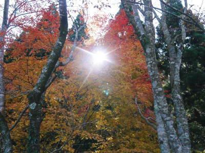 2020年の菊池渓谷&菊池、阿蘇スカイラインの紅葉は今が見ごろ!ビューポイント&穴場スポット紹介!_a0254656_17293713.jpg