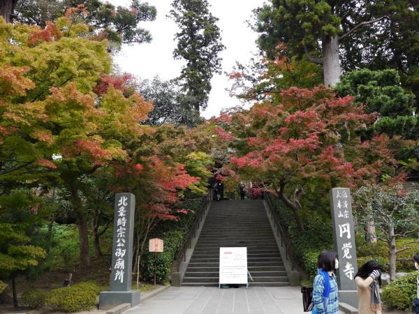 まだ早かったかな・・北鎌倉_e0414858_11025458.jpg