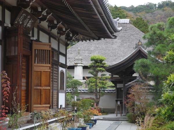 まだ早かったかな・・北鎌倉_e0414858_11030977.jpg