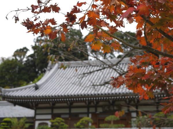 まだ早かったかな・・北鎌倉_e0414858_11045424.jpg