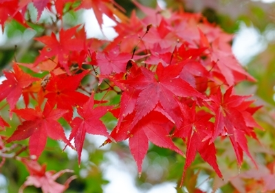 新しい広角レンズで奈良の紅葉を撮ってきました♪_b0194861_21531939.jpg